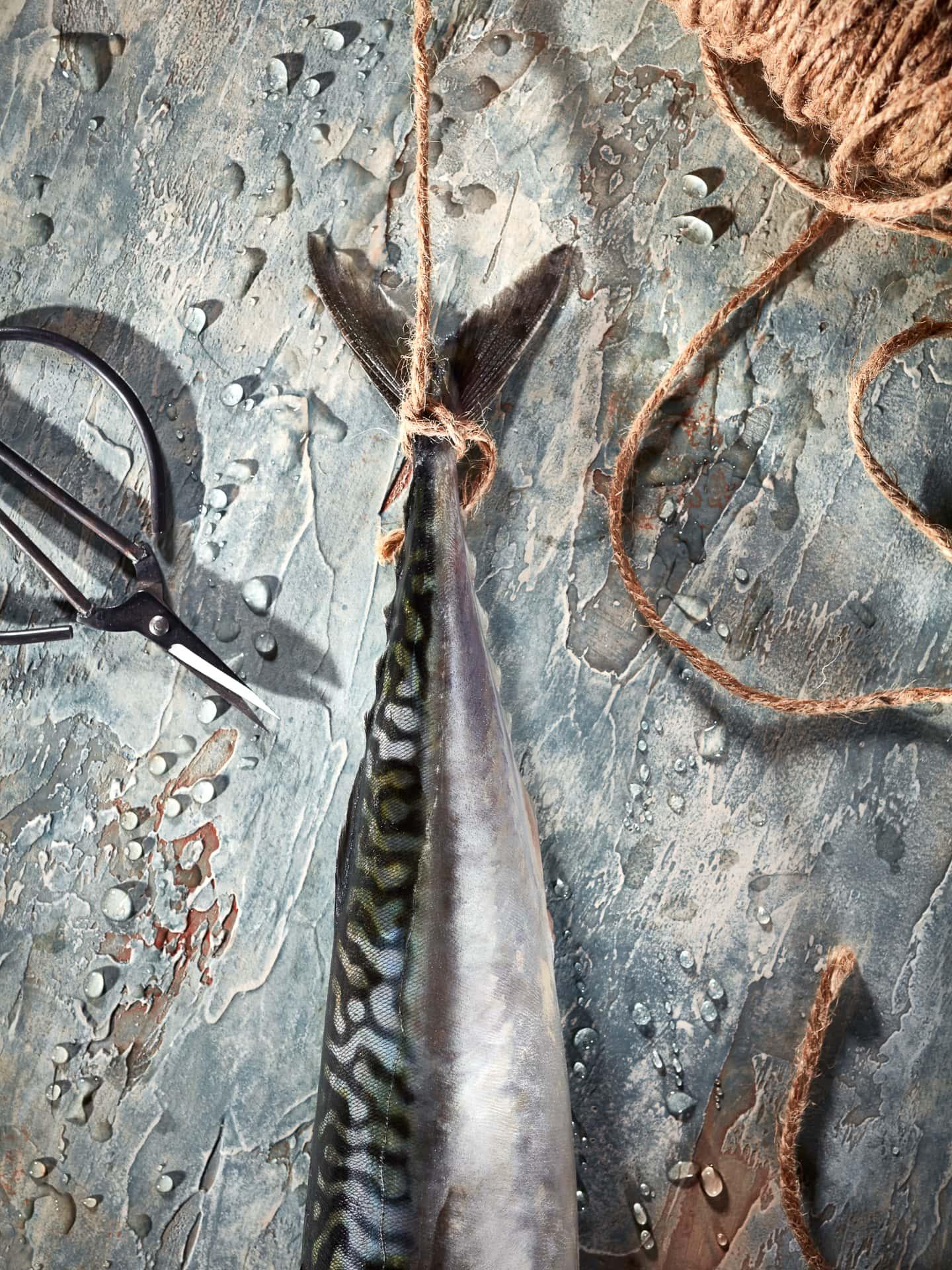 fotografo food cucina delle foto fotografia commerciale pesce sgombro milano venezia